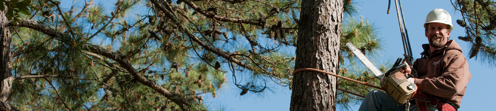 Outer Banks Tree Services
