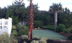 OBX Palm Tree Landscaping