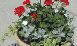 Outer Banks Perennial Flower Bed Landscaping